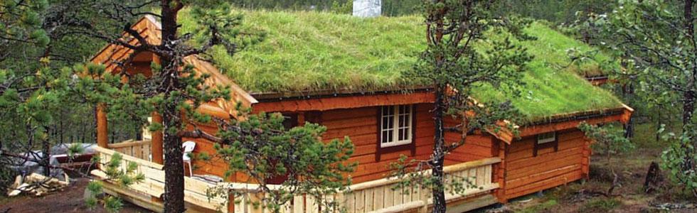 avantaje acoperisuri verzi
